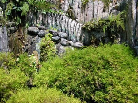 malasia-selva.jpg