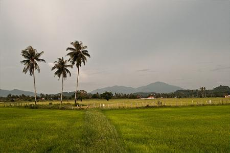 malasia-naturaleza.jpg