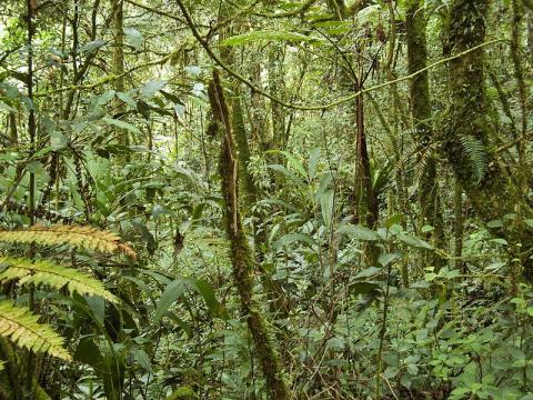 bosque-malasia.jpg